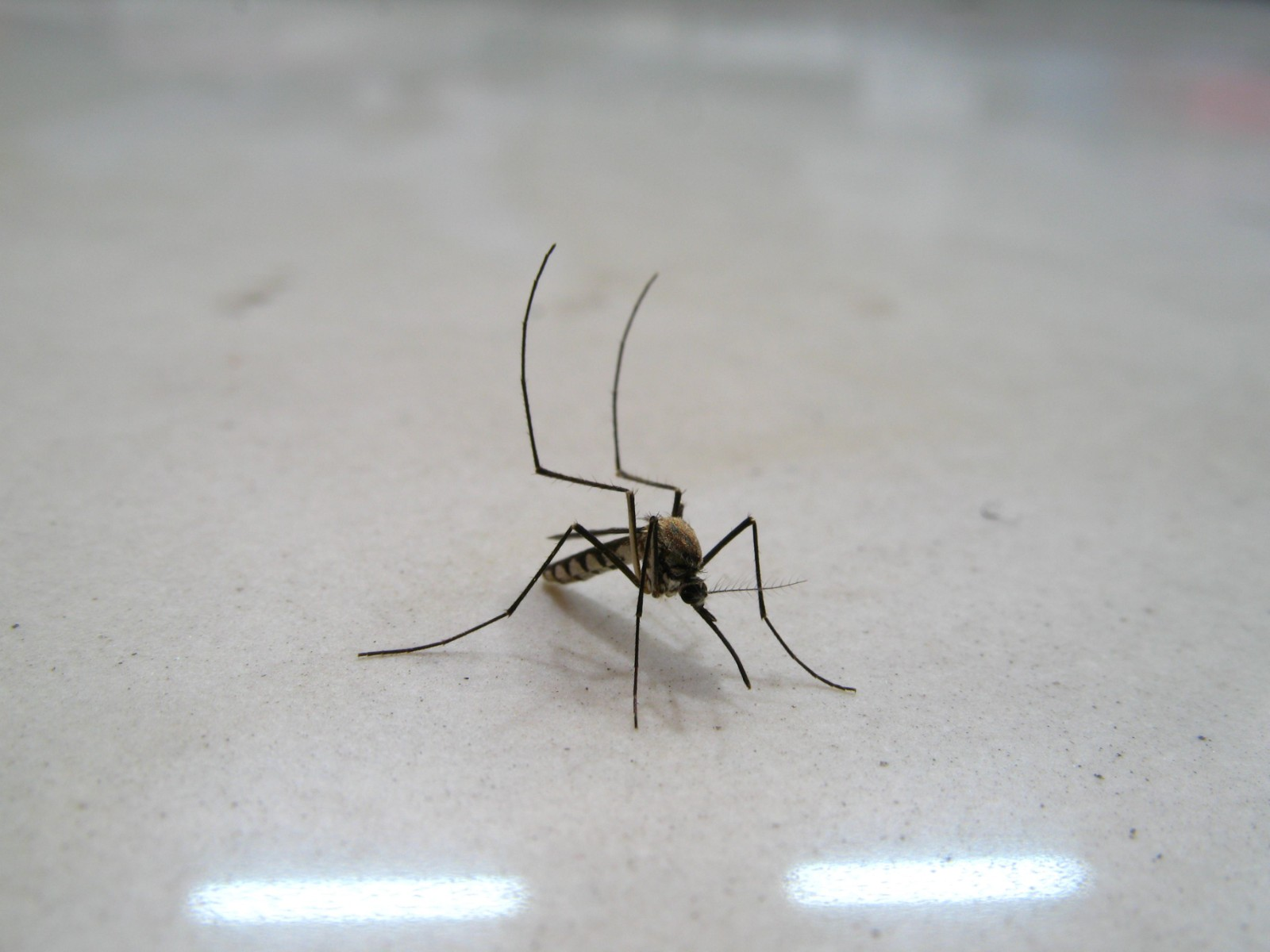 上海灭蝇蚊公司